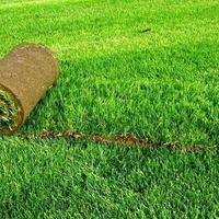 Рецепты зелёного газона