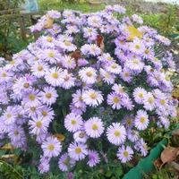 Осень 2014 в моем саду.