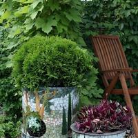 Зебрина обязательно украсит ваш сад
