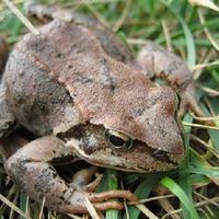 Польза жаб и лягушек для сада