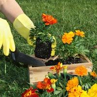 Очищение рук и ногтей после сада
