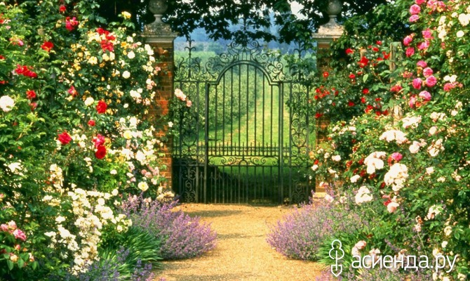 Как облегчить уход за садом?