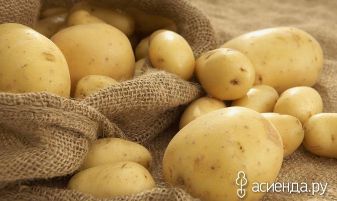 Как сохранить картофель в квартире?
