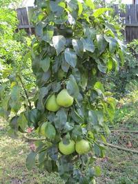 Мой сад 3