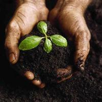 Правила, повышающие урожай