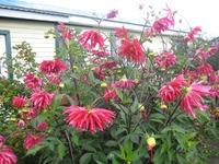 Цветы в полисаднике