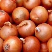 Секреты отличного урожая лука