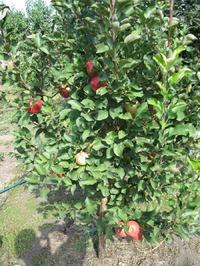 Мой сад 5
