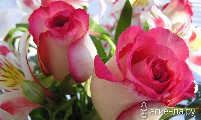 Чего боится роза?