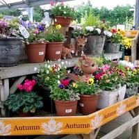 Садовые центры в Англии. Типичный пример (сентябрь 2014)