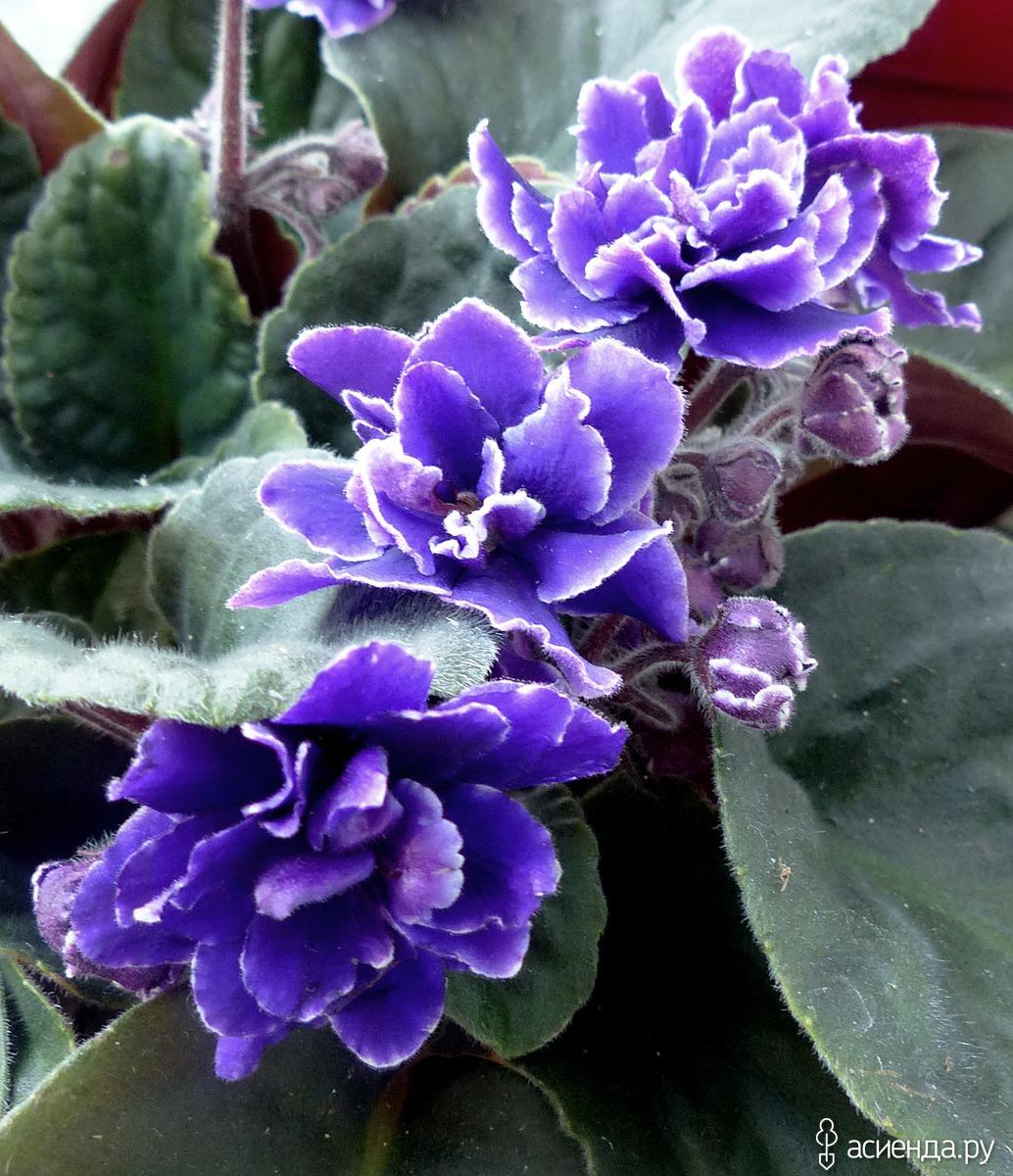 Каталог нецветущих комнатных цветов с фото пропускает