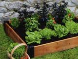 Как обрадовать огородника весной Узнай Здесь