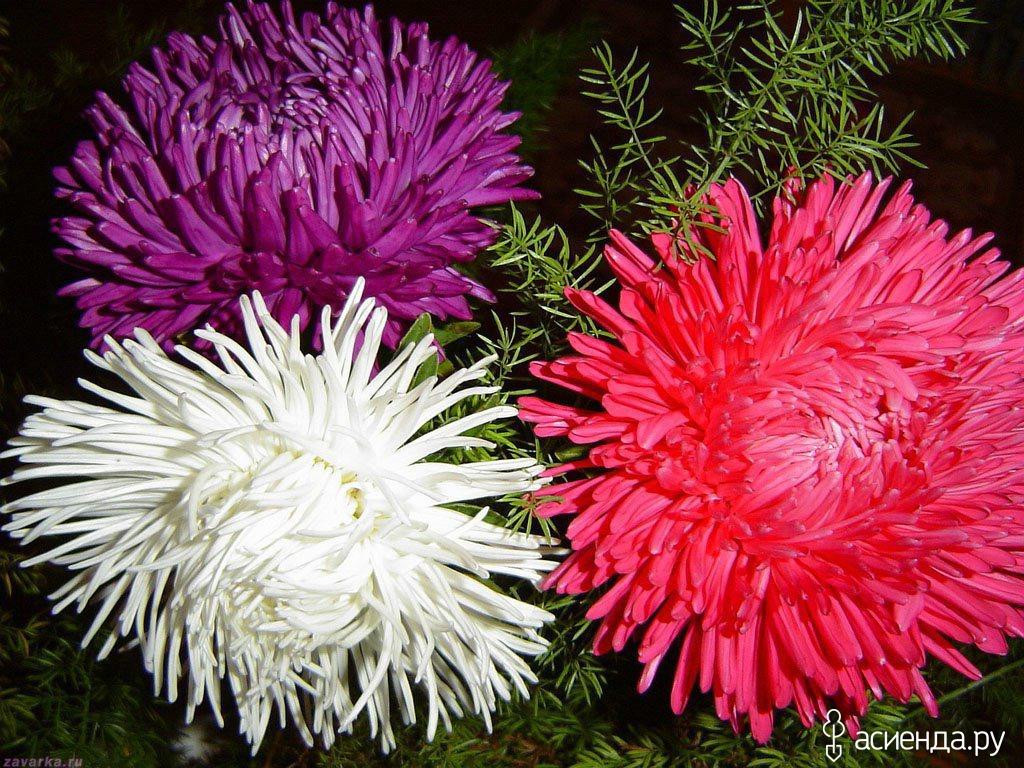 Название цветов посаженных осенью фото