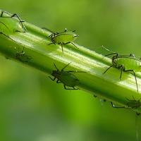 Защита сада-огорода от вредителей