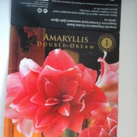 SOS Что случилось с амариллисом?