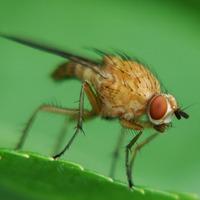 Поборем малинную муху