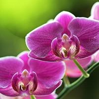 Растения для привлечения любви. Часть 2