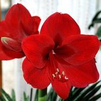 Растения для привлечения любви. Часть 3