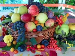 Когда и какие саженцы яблонь посадить?