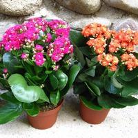 Благотворное влияние растений. Часть 1
