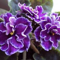Благотворное влияние растений. Часть 3