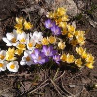 Весна!!! или весна?