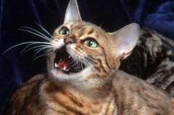 Кошкам этого не предлагать!
