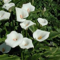 Благотворное влияние растений. Часть 4