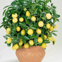 Благотворное влияние растений. Часть 10