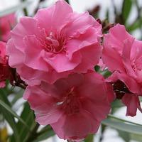 Благотворное влияние растений. Часть 8