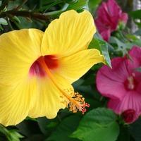 Благотворное влияние растений. Часть 9