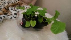 Семена с Алиэкспресс, итоги посевной.