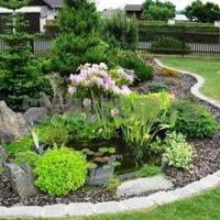 Проблемные растения для декора сада