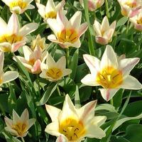 Открытие сезона тюльпанов и утренних пробежек.