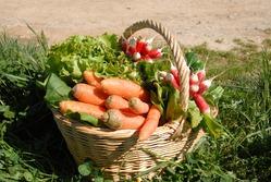 Органические подкормки для огорода от Игоря Лядова