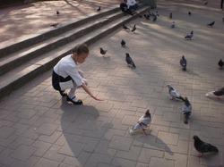 Убираем в птичих домиках и кормим голубей!!