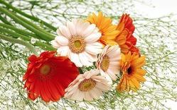 Как продлить жизнь свежесрезанным цветам. Часть 2