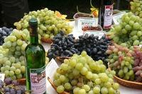 Выставка в институте виноградарства г. Новочеркасск