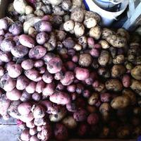 Картошка выкопана.