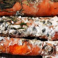 Белая гниль моркови