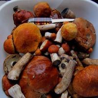 Чита. Хороши в лесу грибочки.