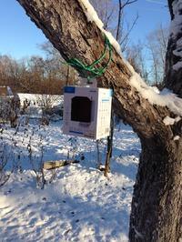 Как Кукарача птичек зимой кормит