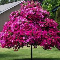 «Деревья» из петуний