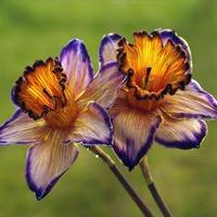 Мой чудненький садик - огородик-4