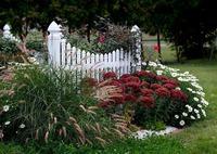 Вопрос: помогите распознать декоративную траву