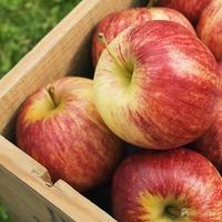 Как правильно хранить яблоки. Часть 1