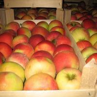 Как правильно хранить яблоки. Часть 2