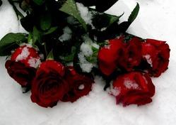 Розы на снегу/ часть 2