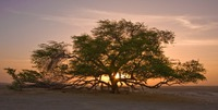 Дерево жизни/часть 4