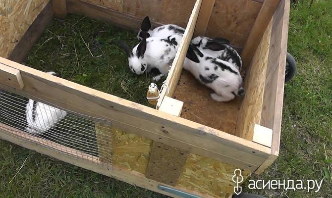 Как построить крольчатник